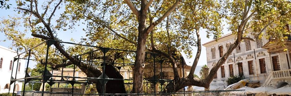 Kos Kasabası(Old Town) ve Hipokrat Ağacı